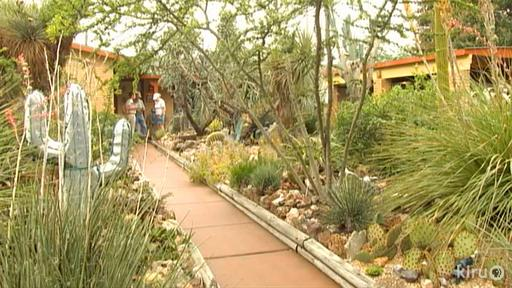 Hardy Agaves Video Thumbnail