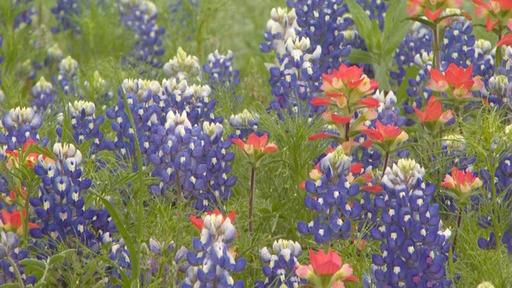 Wildflowers: Seeds of History Video Thumbnail