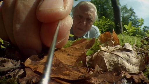 Attenborough's Life Stories: Life On Camera Video Thumbnail