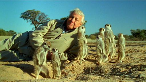 Attenborough's Life Stories: Understanding The Nat Video Thumbnail
