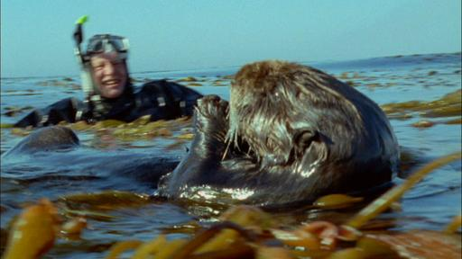 Attenborough's Life Stories, Our Fragile Planet Video Thumbnail