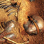 Bog Bodies of the Iron Age