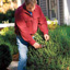 Shrub Pruning Dos and Don'ts