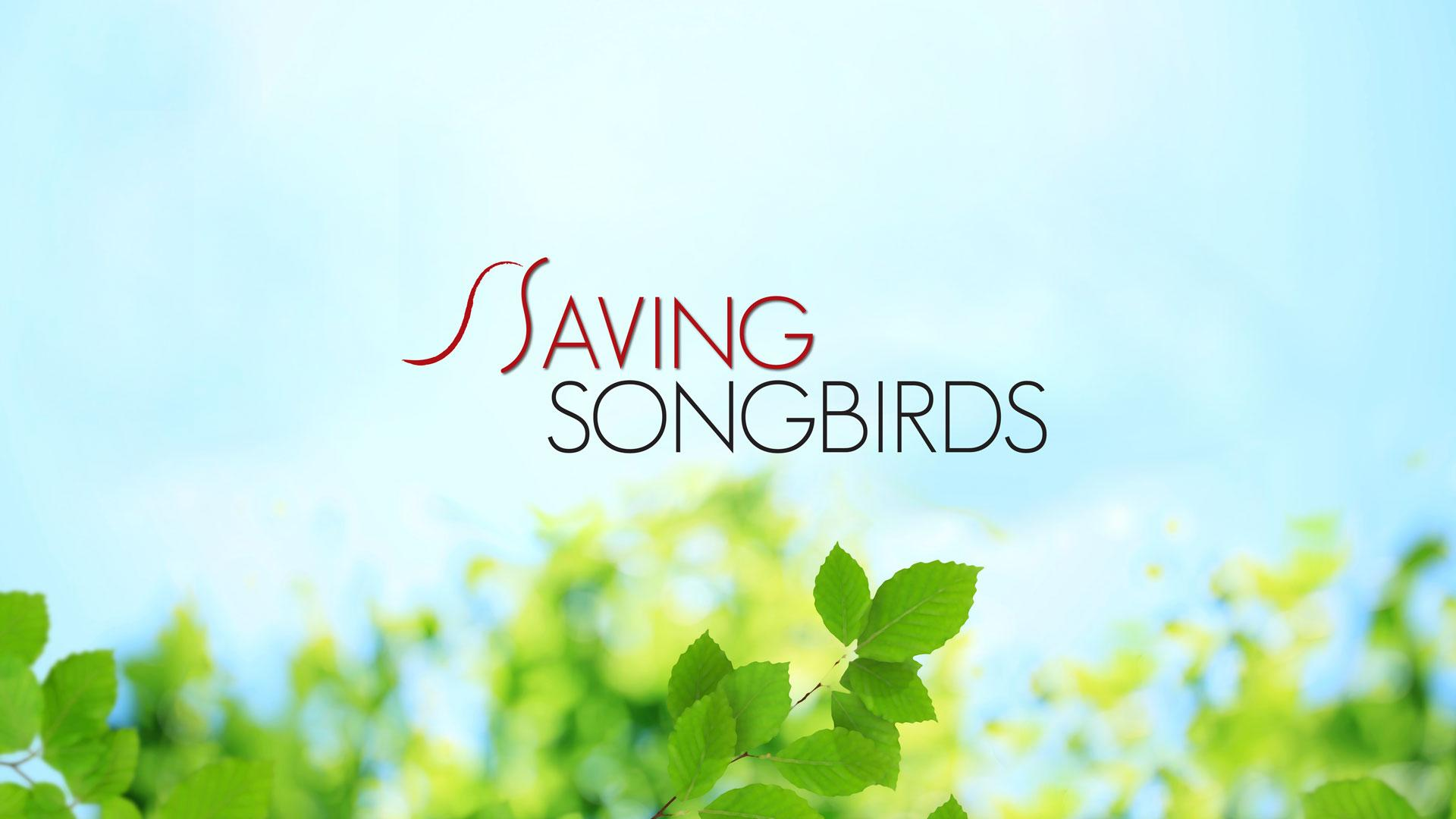 Saving Songbirds