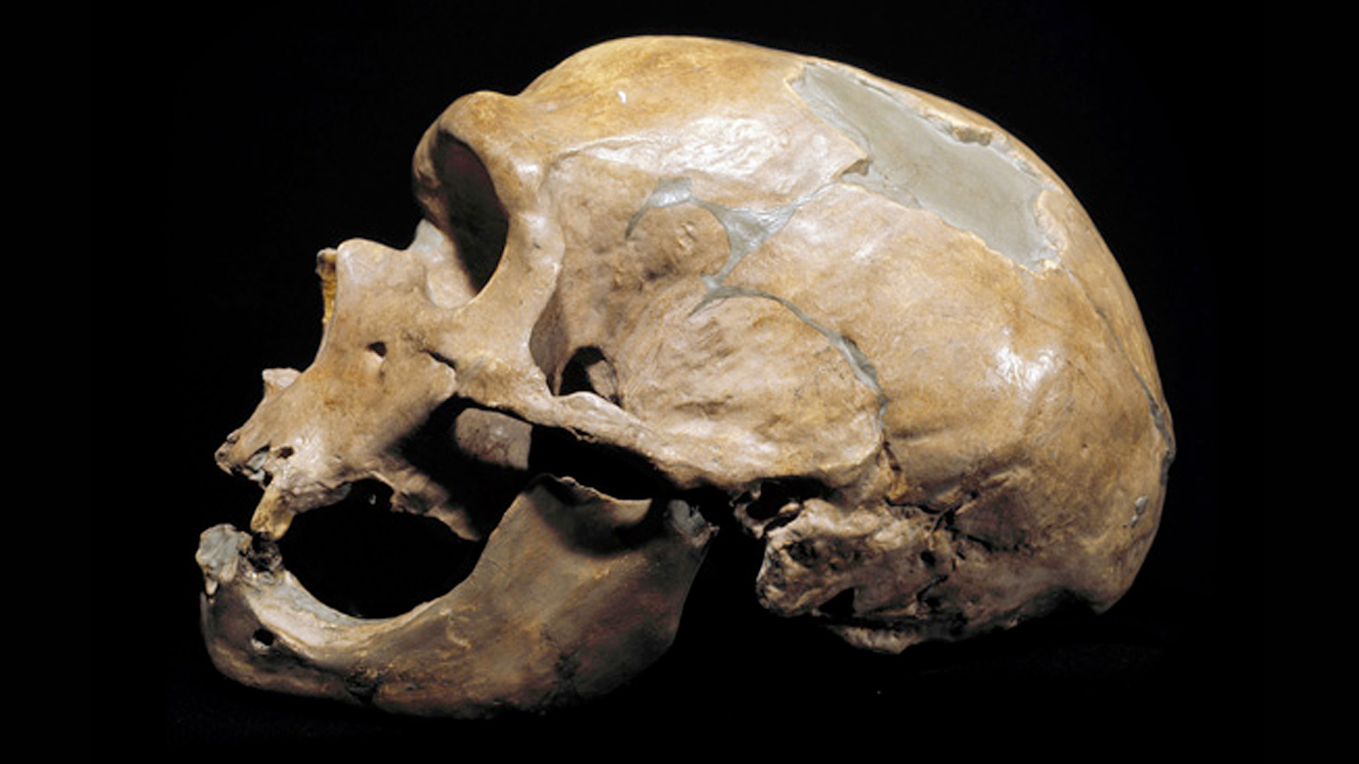 Are Neanderthals Human?